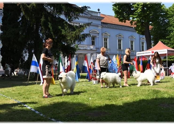 Výstava psov Samojed 2018